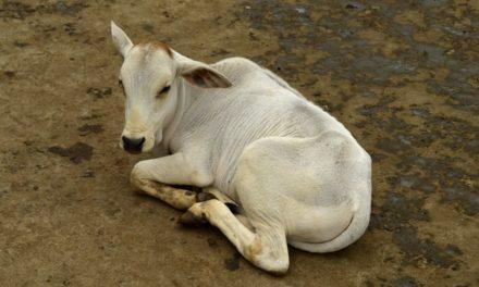 ವೈದೇಹಿ ಕಾಲಂ- ಹಾಯ್ಗುಳಿ ದೈವಕ್ಕೆ ಅಡ್ಡ ಬಿದ್ದೆ