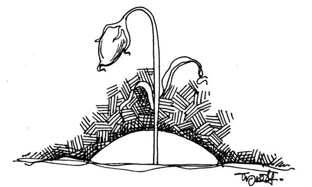 ವಸ್ತಾರೆ ಬರೆದ ದಿನದ ಕವಿತೆ  ` …..ಒಬ್ಬಳು'
