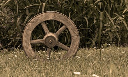 ತರೀಕೆರೆ ಏರಿಯಾ – ಒಡೆದ ವಾಡೆಗಳಲ್ಲಿ ಲೋಕ ಜ್ಞಾನ