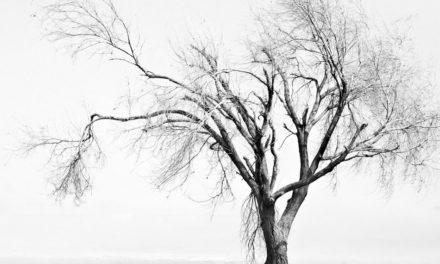 ಬಿಸಿಲುಕೋಲು- ನಿಸರ್ಗವನ್ನು ಅರಿತೆವು ಎಂಬ ಒಣ ಹಮ್ಮು