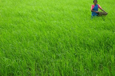 ಈ ನೆಲದ ಜಾಲಿ ಹೂ : ರೈತ ಹೋರಾಟಗಾರ್ತಿ ಅನಸೂಯಮ್ಮ