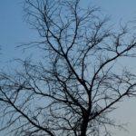 ಇರುವೆಗೆ ಆನೆಯ ಕಷ್ಟ: ಅಬ್ದುಲ್ ರಶೀದ್ ಅಂಕಣ