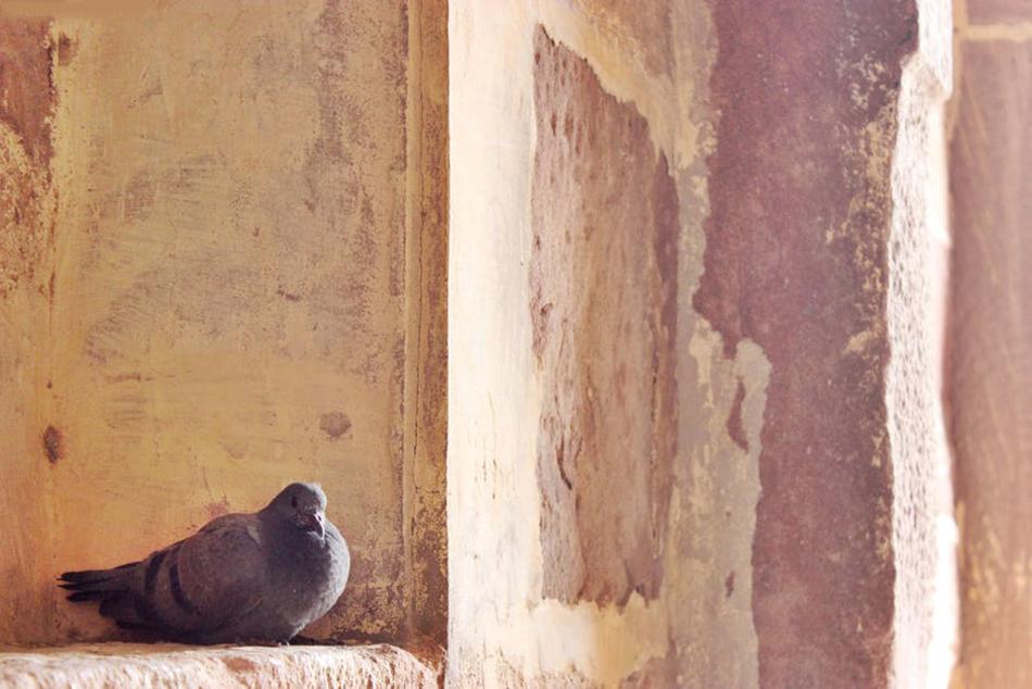 ಹಕ್ಕಿಯ ಹಿಕ್ಕೆ ಮತ್ತು ಆರ್ಕಿಟೆಕ್ಚರ್:ವಸ್ತಾರೆ  ಪಟ್ಟಣ ಪುರಾಣ