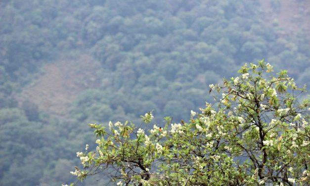 ಹಬ್ಬಿದಾ ಬಂಜಾರುಮಲೆಯ ಮಧ್ಯದೊಳಗೆ: ಪ್ರಸಾದ್ ಶೆಣೈ ಕಥಾನಕ