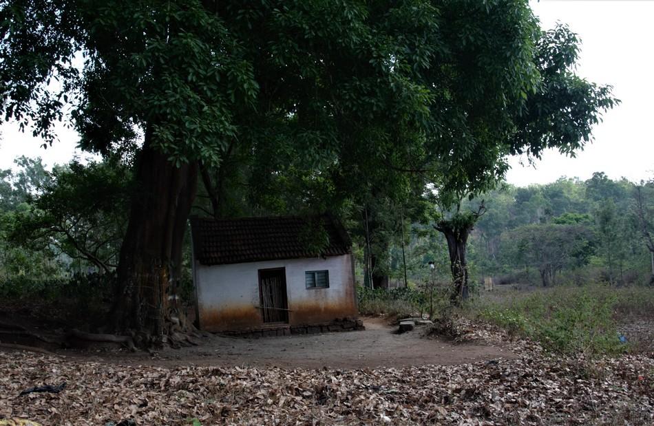 ರಂಗನಬೆಟ್ಟದ ಕುಸುಮಾಲೆಯರ ಖುಷಿಗಳ ಕುರಿತು:ಮಧುರಾಣಿ ಅಂಕಣ