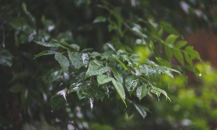 ಇಳೆಯ ಹಾಗೆ ಮಳೆಗೆ ಕಾಯುತ್ತಾ: ರೂಪಶ್ರೀ ಕಲ್ಲಿಗನೂರ್ ಅಂಕಣ