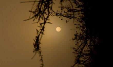 ಆದರ್ಶ ಬಿ.ಎಸ್ ತೆಗೆದ ಈ ದಿನದ ಚಿತ್ರ