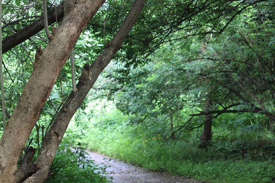 ಬಿದಿರುಮೆಳೆಯಲ್ಲಿ ಹೂತ ಹೆಣ: ಮುನವ್ವರ್ ಜೋಗಿಬೆಟ್ಟು ಅಂಕಣ