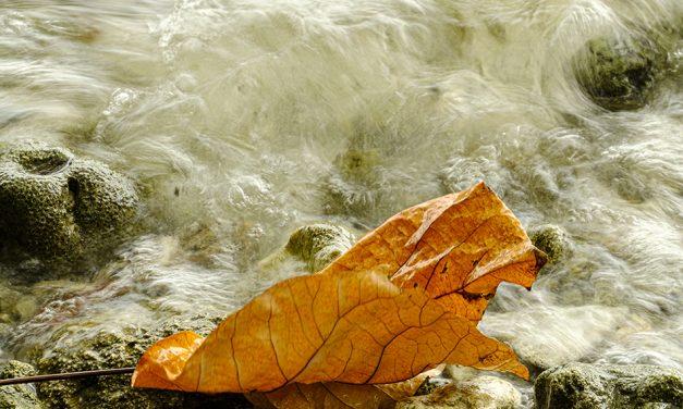ಹುಡುಕುವ ಭರ, ಕಳೆದುಹೋಗುವ ಭಯ: ಪ್ರಶಾಂತ್ ಬೀಚಿ ಅಂಕಣ