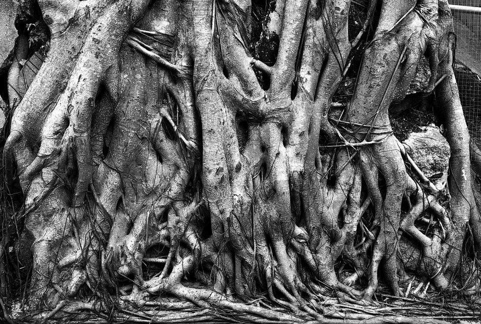 ಭೂಮಿಯಾಳದ ಬೇರುಗಳು: ಶಿವಶಂಕರ ಸೀಗೆಹಟ್ಟಿ ಬರೆದ ಈ ದಿನದ ಕವಿತೆ